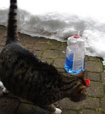 Frostschutz und Katzen - eine gefährliche Liason | Tierarztpraxis-Hanau.de