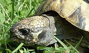Schildkröte nach der Auswinterung | Reptilien-Tierarzt-Hanau.de