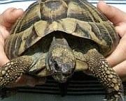Schildkröte nach der Auswinterung im Gras| Reptilien-Tierarzt-Hanau.de