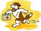 Tier-Erste-Hilfe-Kurs