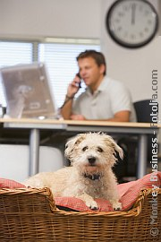 Tiere am Arbeitsplatz | Tierarztpraxis-Hanau.de