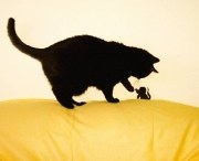Katz- und Maus | Tierarztpraxis-Hanau.de