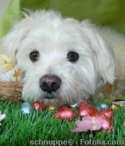 Schokolade ist für Hunde Gift  | Tierarztpraxis-Hanau.de