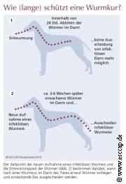 Wurm Kur Zyklus   | Tierarztpraxis-Hanau.de