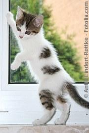 Fensterfallen | Tierarztpraxis-Hanau.de