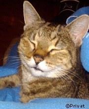 Topoline - Katze vermisst | Tierarztpraxis-Hanau.de