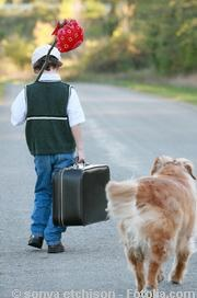 Kind und Hund auf der Landstra?e| Tierarztpraxis-Hanau.de