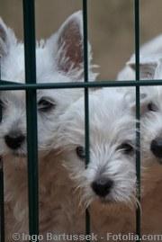 Hunde im Käfig | Tierarztpraxis-Hanau.de