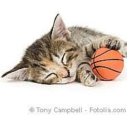 Katzen brauchen Beschäftigung Tierkennzeichnung | Tierarztpraxis-Hanau.de