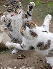 Katzen - Streit im Revier | Tierarztpraxis-Hanau.de