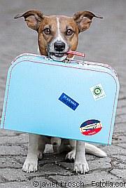 Reisen mit Tieren |Tierarztpraxis-Hanau.de