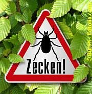 Zeckengefahr | Tierarztpraxis-Hanau.de