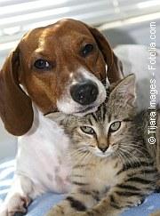 Vorsorge ist aktiver Tierschutz | Tierarztpraxis-Hanau.de