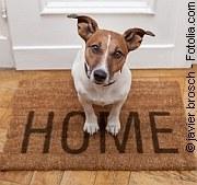 Home | Tierarztpraxis-Hanau.de