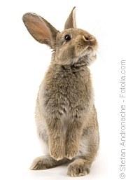Impfungen für Kaninchen|Tierarztpraxis-Hanau.de