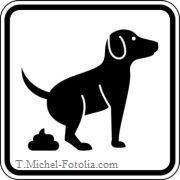 Durchfall beim Hund |Tierarztpraxis-Hanau.de