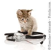 Katzen-Spezial | Tierarztpraxis-Hanau.de