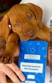 Welpen: Neue Einreiseregelung für Deutschland | Tierarztpraxis-Hanau.de