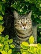 Tipps gegen Zecken im eigenen Garten | Tierarztpraxis-Hanau.de
