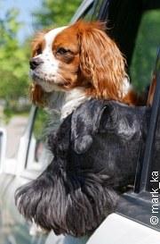 Hitze-Regeln für Hundehalter | Tierarztpraxis-Hanau.de