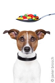 Vorsicht bei Nahrungsergänzung  | Tierarztpraxis-Hanau.de