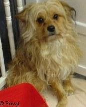 Buddy sucht ein neues Zuhause | Tierarztpraxis-Hanau.de