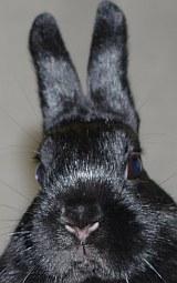 Kaninchen zu Ostern ? - Besser nicht! | Tierarztpraxis-Hanau.de