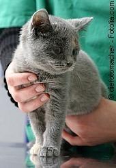 Tierschutz fängt zu Hause an |  Tierarztpraxis-Hanau.de