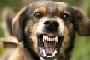 preview: Verhaltenstherapie oder Verhaltensmedizin ?
