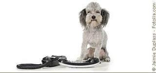 Sprechstunde - Tierarztpraxis Hanau
