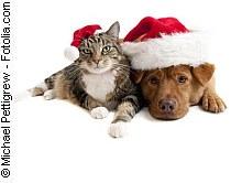 Gefahren unter dem Weihnachtsbaum | Tierarztpraxis-Hanau.de