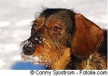 Schneefressen kann zum Durchfall führen  | Tierarztpraxis-Hanau.de