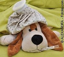 Schweinegrippe und Tiere ? | Tierarztpraxis-Hanau.de