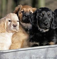 Vorsicht beim Welpenkauf! | Tierarztpraxis-Hanau.de