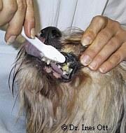 Zahnpflege ist Tierschutz | Tierarztpraxis-Hanau.de