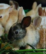 Kaninchen | Tierarztpraxis-Hanau.de