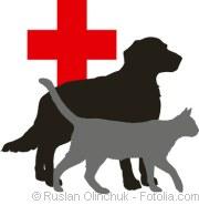 Erste Hilfe für Hund und Katze | Tierarztpraxis-Hanau.de