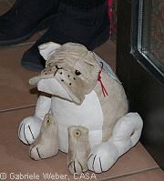 Türsteher - Hund | Tierarztpraxis-Hanau.de
