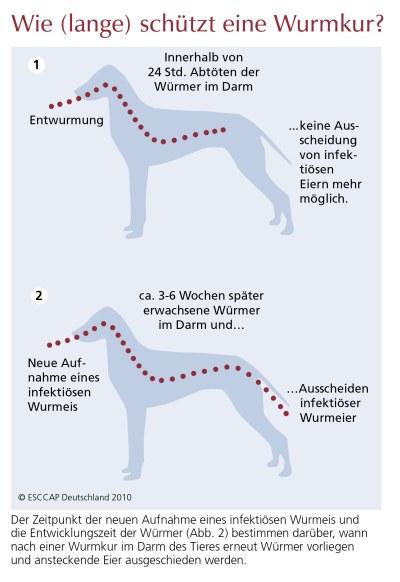 Tierinfo Wie Lange Schutzt Eine Wurmkur