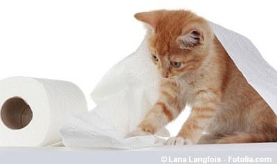 Anhaltender Durchfall bei der Katze - Giardien?   | Tierarztpraxis-Hanau.de