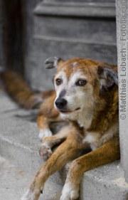 Südländischer Hund| Tierarztpraxis-Hanau.de