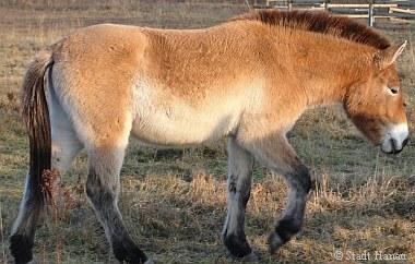 Trauer umd das Przewaslki-Pferd Adina |Tierarztpraxis-Hanau.de