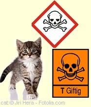 Gefahrenzeichen - GIFT |Tierarztpraxis-Hanau.de