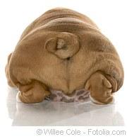 Übergewicht bei Tieren |Tierarztpraxis-Hanau.de