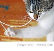 Ungesunde Ernährung für Tier |Tierarztpraxis-Hanau.de