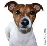 Hunde-Erziehung|Tierarztpraxis-Hanau.de