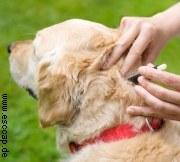 ESCCAP-Zeckenprophylaxe|Tierarztpraxis-Hanau.de
