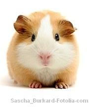 Keine Tierversuche|Tierarztpraxis-Hanau.de