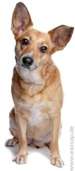 Hunde aus dem Ausland | Tierarztpraxis-Hanau.de