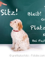 So finden Sie die richtige Welpengruppe | Tierarztpraxis-Hanau.de